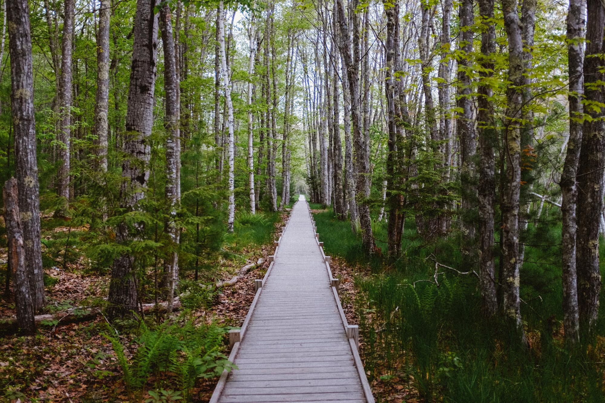 The Jesup Path. Dreamy.